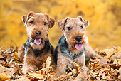 DOG 02 PE0016 01