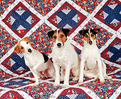 DOG 02 RK0014 11