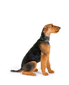 DOG 02 RK0029 02