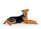 DOG 02 RK0030 02