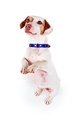 DOG 02 RK0049 03