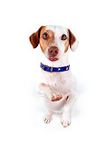 DOG 02 RK0049 06