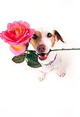 DOG 02 RK0050 07