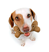 DOG 02 RK0051 01