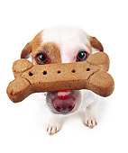DOG 02 RK0052 01