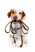 DOG 02 RK0058 03