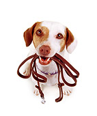 DOG 02 RK0058 08