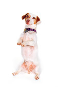 DOG 02 RK0120 13