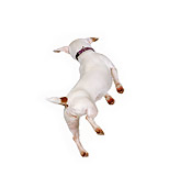 DOG 02 RK0123 01