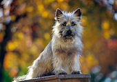 DOG 02 RK0173 09