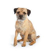 DOG 02 RK0411 01
