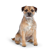 DOG 02 RK0412 01