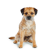 DOG 02 RK0413 01