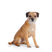 DOG 02 RK0414 01