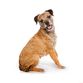 DOG 02 RK0415 01