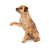 DOG 02 RK0416 01