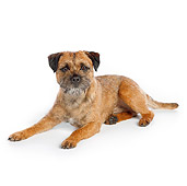 DOG 02 RK0418 01