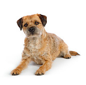 DOG 02 RK0419 01