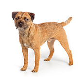 DOG 02 RK0420 01