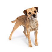 DOG 02 RK0421 01