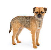 DOG 02 RK0422 01