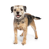 DOG 02 RK0423 01
