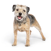 DOG 02 RK0424 01