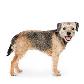 DOG 02 RK0425 01