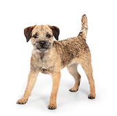 DOG 02 RK0426 01