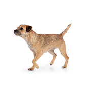 DOG 02 RK0427 01