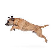 DOG 02 RK0428 01