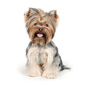 DOG 02 RK0430 01