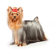 DOG 02 RK0432 01