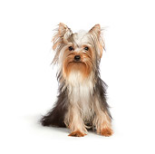 DOG 02 RK0434 01