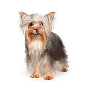 DOG 02 RK0435 01