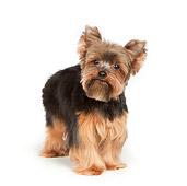 DOG 02 RK0436 01