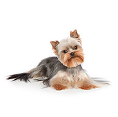 DOG 02 RK0438 01