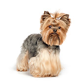 DOG 02 RK0439 01