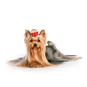 DOG 02 RK0442 01