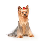 DOG 02 RK0443 01