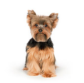 DOG 02 RK0444 01