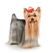 DOG 02 RK0446 01