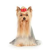 DOG 02 RK0447 01