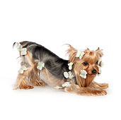 DOG 02 RK0448 01