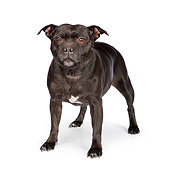 DOG 02 RK0449 01