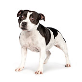DOG 02 RK0452 01