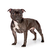 DOG 02 RK0453 01
