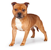 DOG 02 RK0454 01