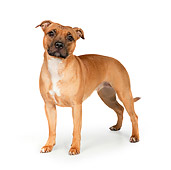 DOG 02 RK0456 01