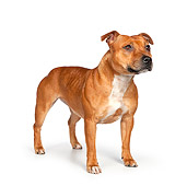 DOG 02 RK0459 01